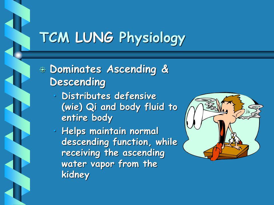 TCM LUNG Physiology Dominates Ascending & Descending