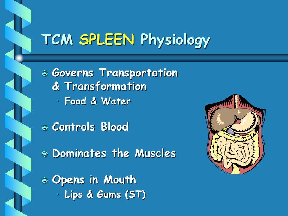 TCM SPLEEN Physiology Governs Transportation & Transformation