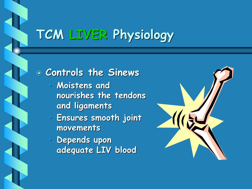 TCM LIVER Physiology Controls the Sinews