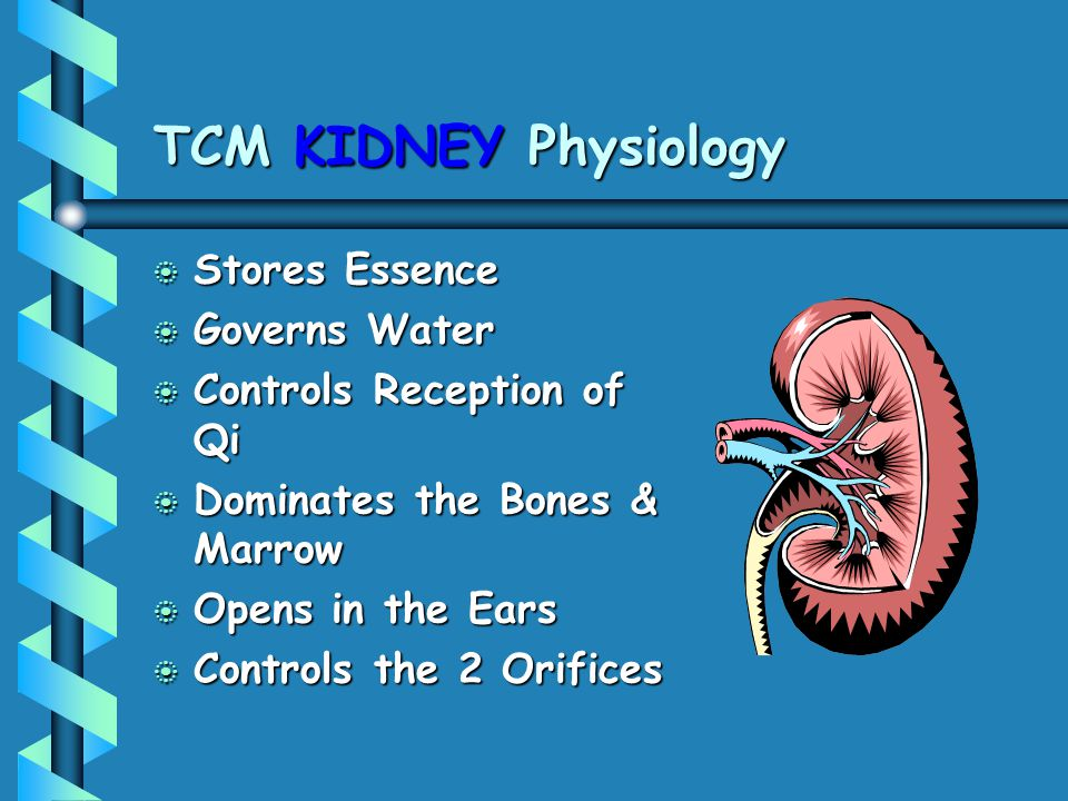 TCM KIDNEY Physiology Stores Essence Governs Water