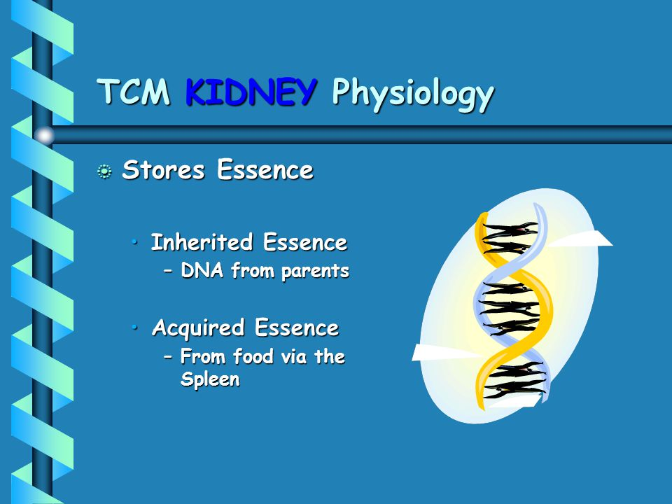 TCM KIDNEY Physiology Stores Essence Inherited Essence