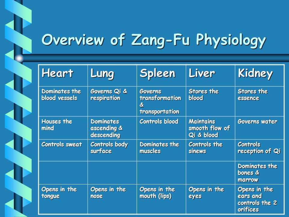 Overview of Zang-Fu Physiology