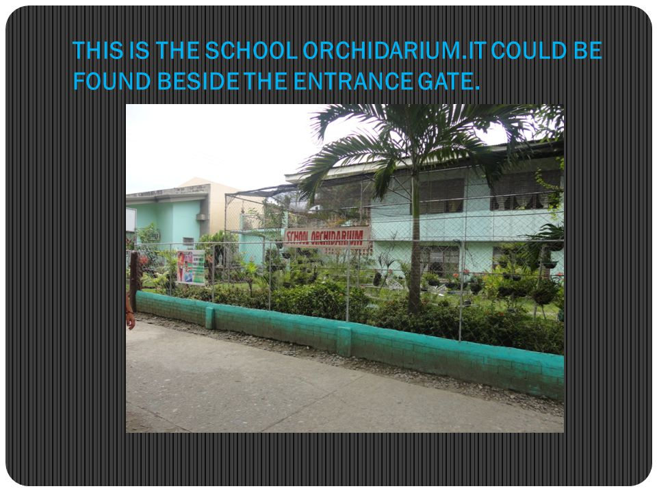 THIS IS THE SCHOOL ORCHIDARIUM