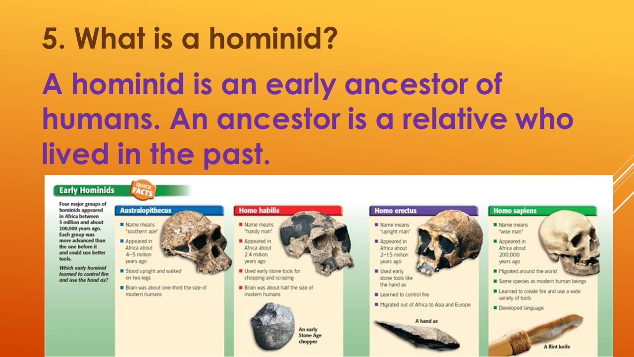 5. What is a hominid. A hominid is an early ancestor of humans