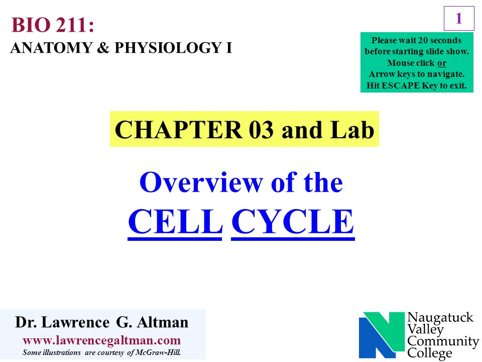 CELL CYCLE Overview of the CHAPTER 03 and Lab BIO 211: