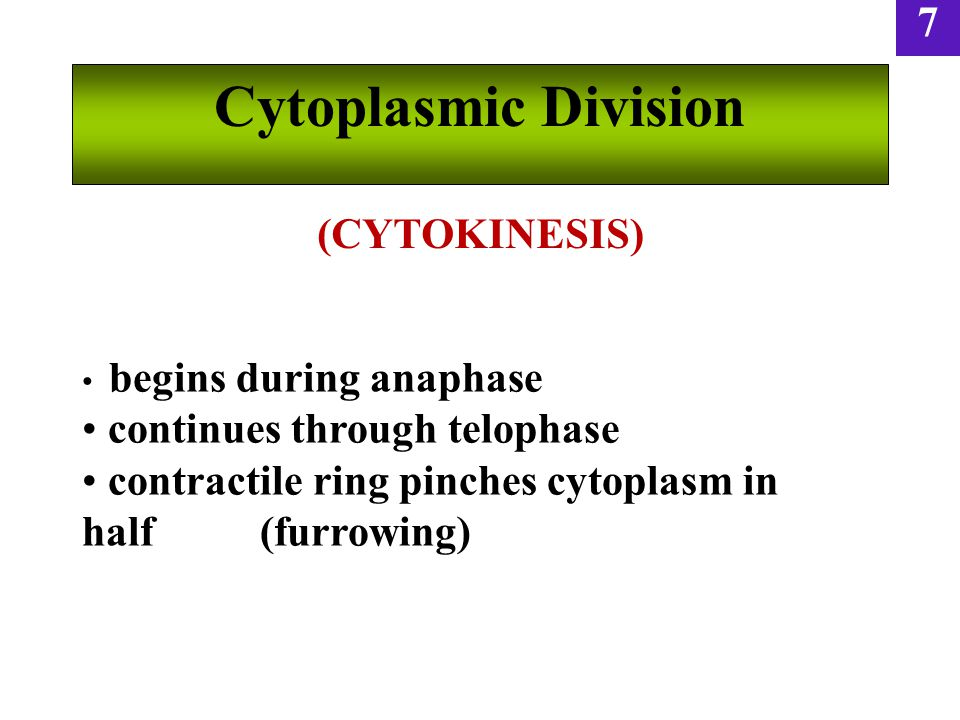 Cytoplasmic Division (CYTOKINESIS) continues through telophase