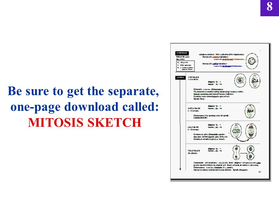 Be sure to get the separate, one-page download called: