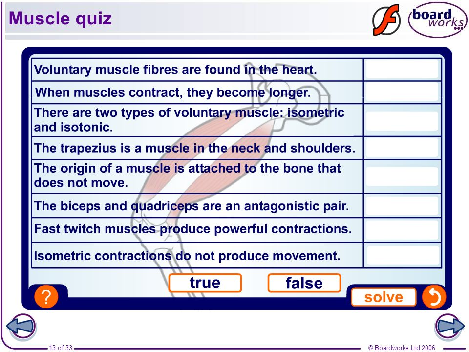 Muscle quiz
