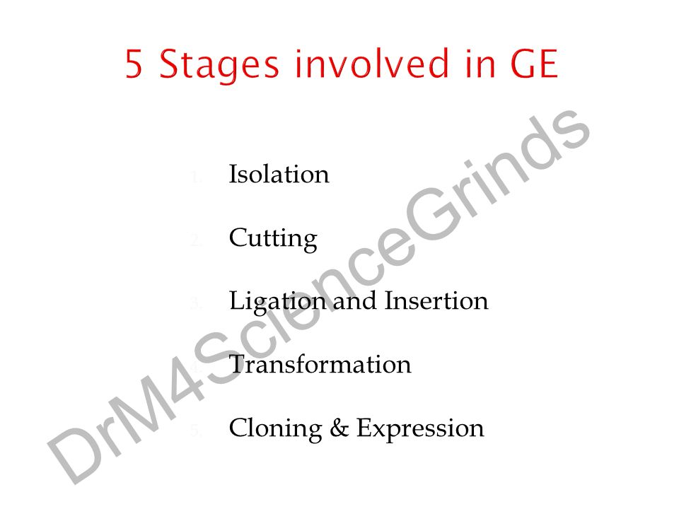 5 Stages involved in GE Isolation Cutting Ligation and Insertion