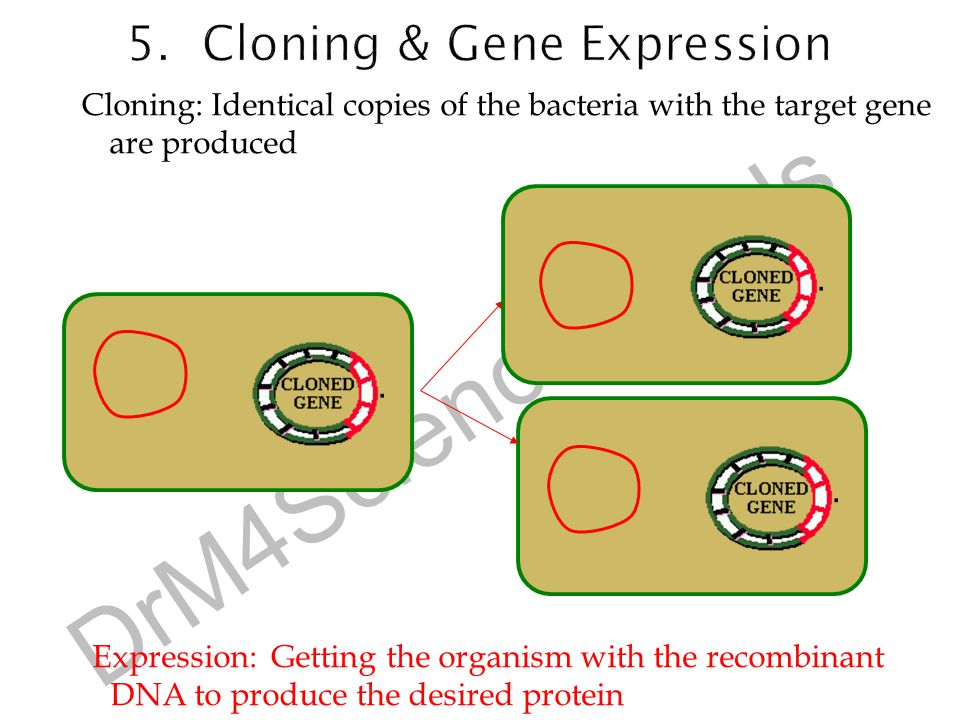 5. Cloning & Gene Expression