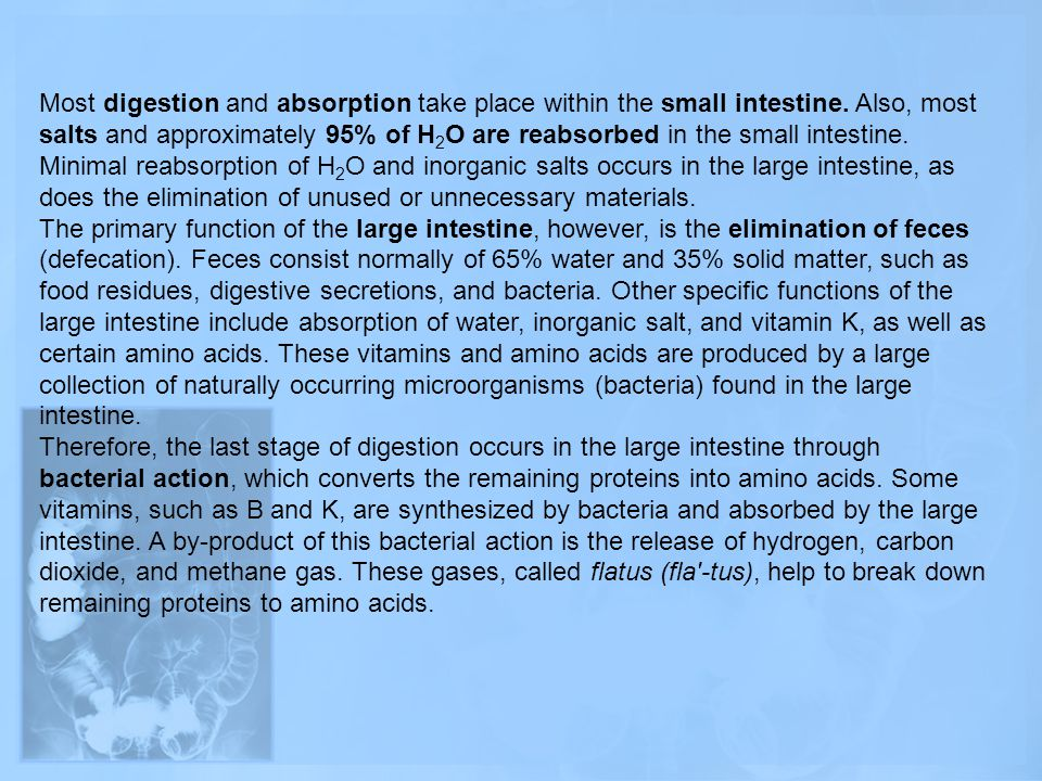 Most digestion and absorption take place within the small intestine