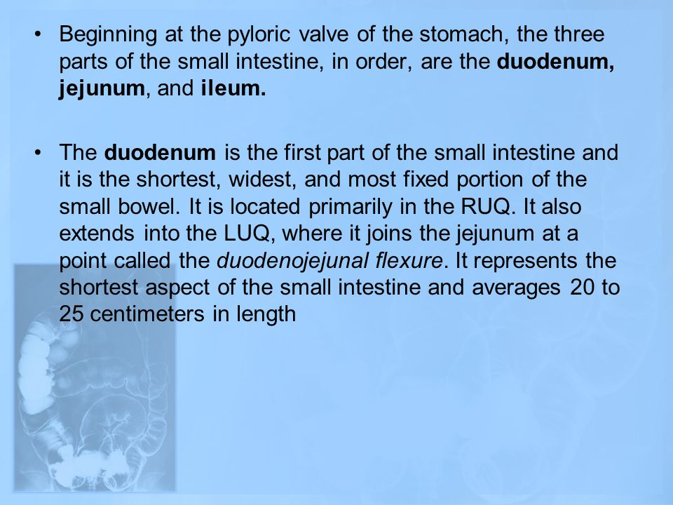 Beginning at the pyloric valve of the stomach, the three parts of the small intestine, in order, are the duodenum, jejunum, and ileum.