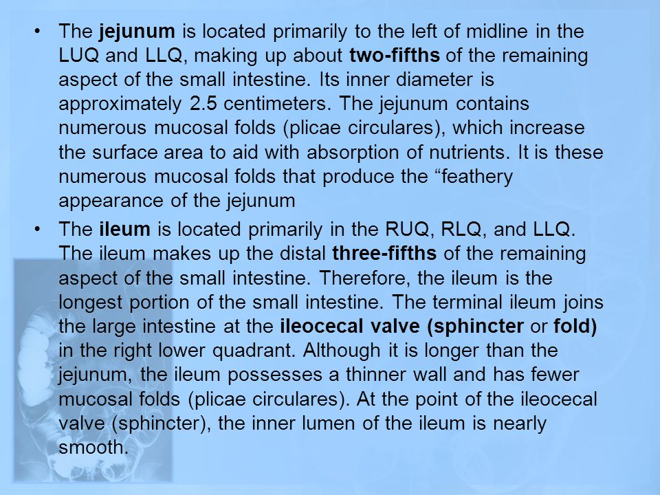 The jejunum is located primarily to the left of midline in the LUQ and LLQ, making up about two-fifths of the remaining aspect of the small intestine. Its inner diameter is approximately 2.5 centimeters. The jejunum contains numerous mucosal folds (plicae circulares), which increase the surface area to aid with absorption of nutrients. It is these numerous mucosal folds that produce the feathery appearance of the jejunum