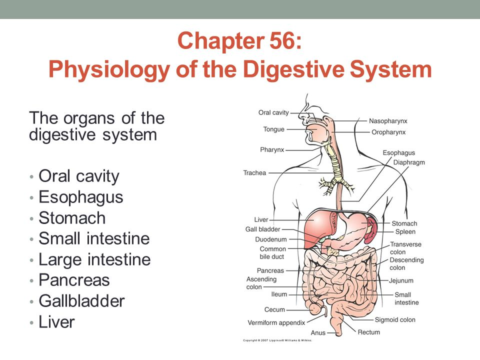 Chapter 56: Physiology of the Digestive System
