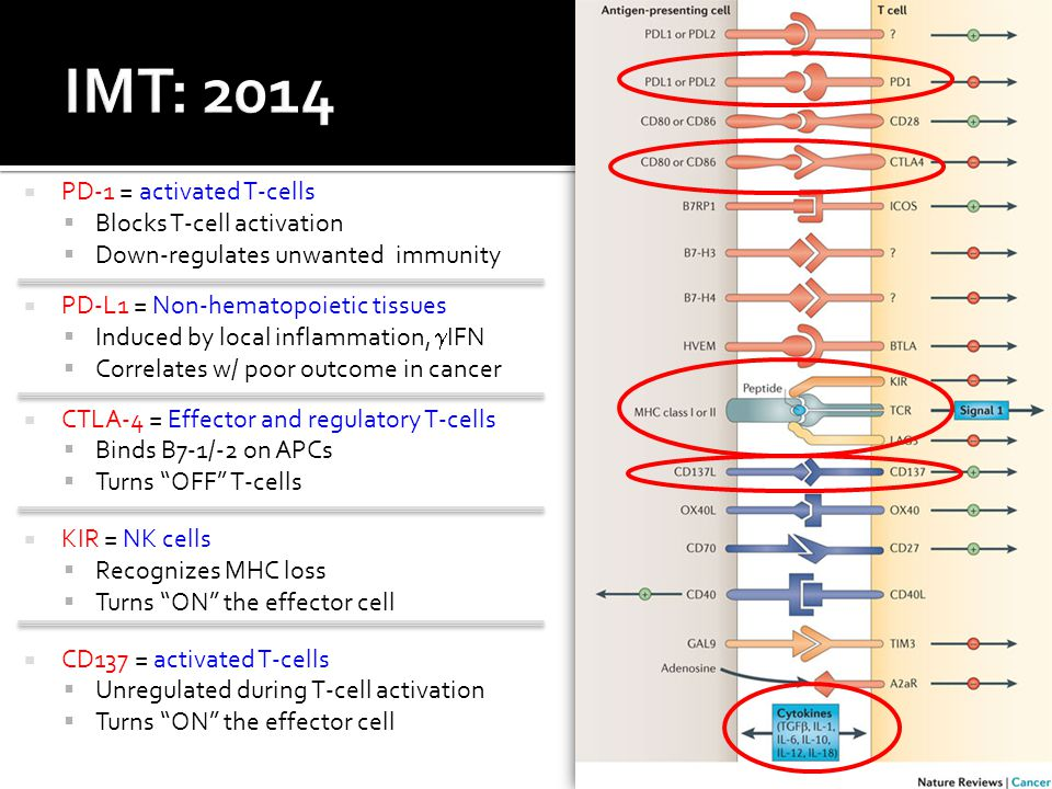 IMT: 2014 PD-1 = activated T-cells Blocks T-cell activation