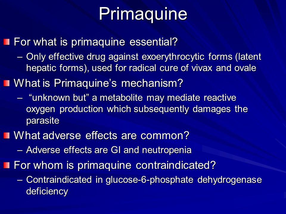 Primaquine For what is primaquine essential