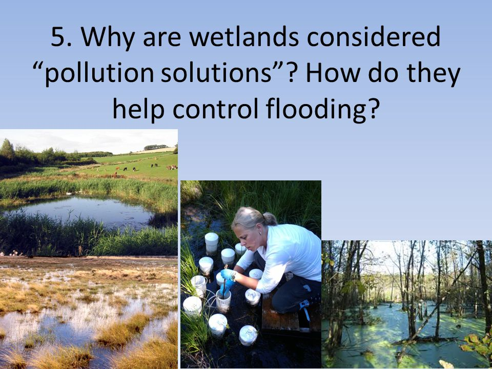 5. Why are wetlands considered pollution solutions