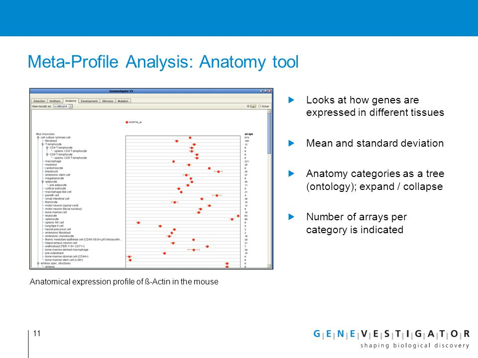 Meta-Profile Analysis: Anatomy tool