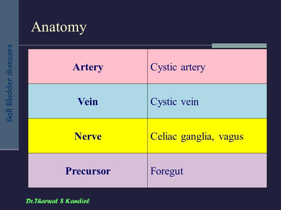 Anatomy Artery Cystic artery Vein Cystic vein Nerve