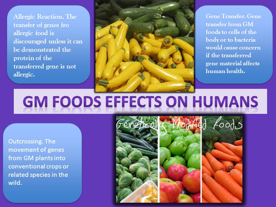 GM Foods Effects on Humans