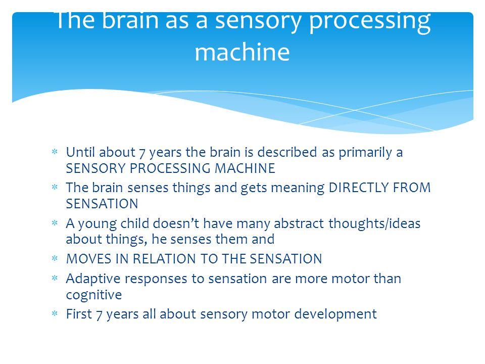 The brain as a sensory processing machine