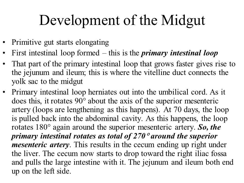 Development of the Midgut
