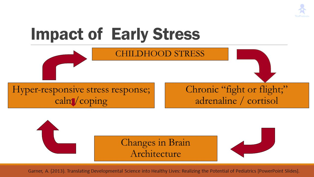 Impact of Early Stress Hyper-responsive stress response; calm/coping