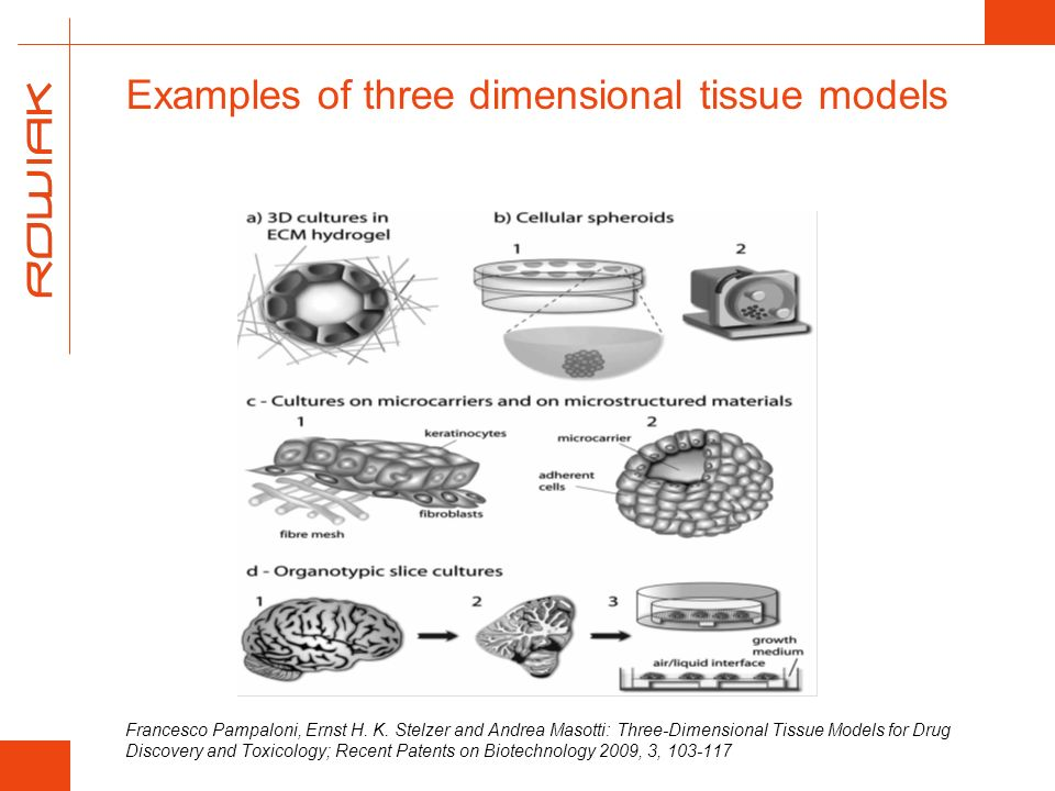 Examples of three dimensional tissue models