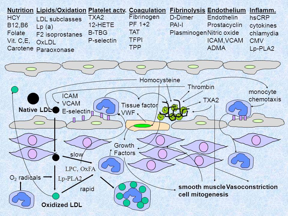 Platelet actv. TXA2. 12-HETE. B-TBG. P-selectin. Endothelium. Endothelin. Prostacyclin. Nitric oxide.