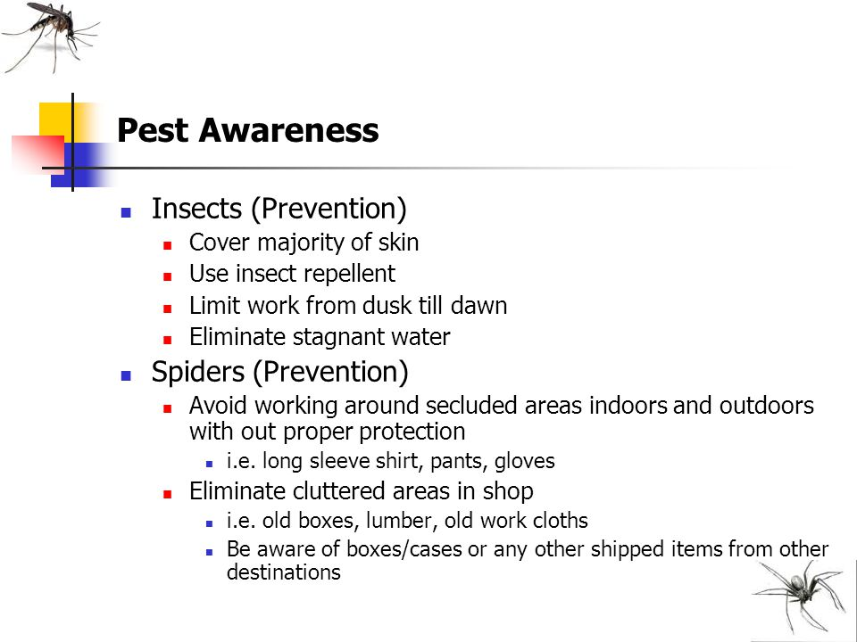 Pest Awareness Insects (Prevention) Spiders (Prevention)