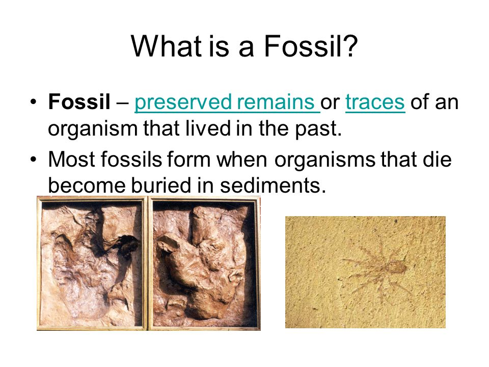 What is a Fossil Fossil – preserved remains or traces of an organism that lived in the past.