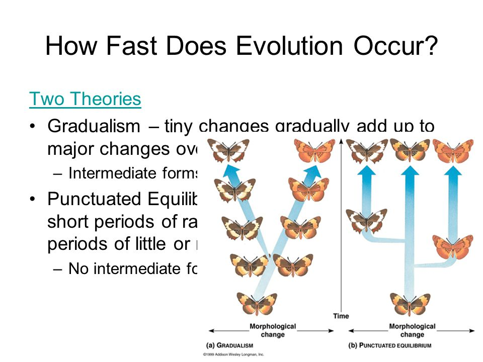 How Fast Does Evolution Occur