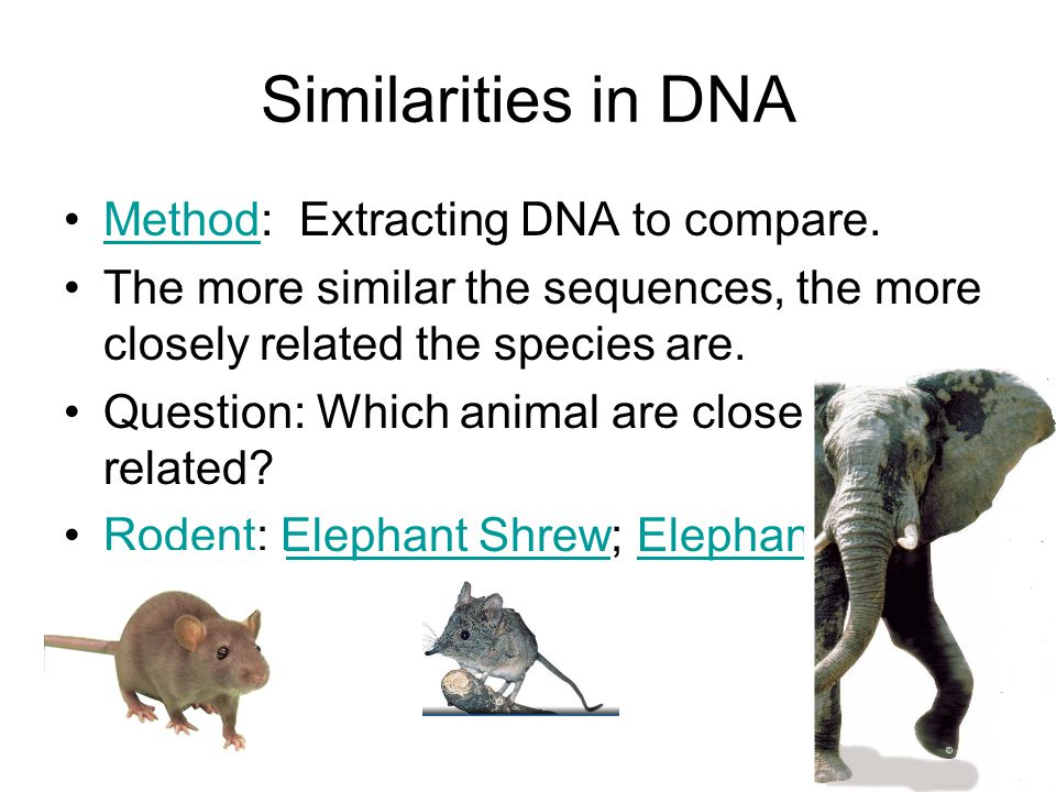 Similarities in DNA Method: Extracting DNA to compare.