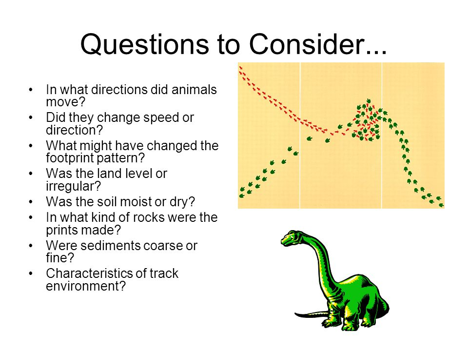 Questions to Consider... In what directions did animals move