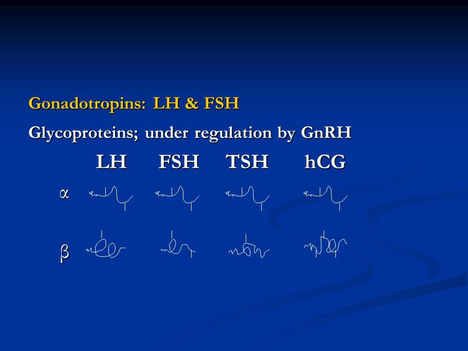 LH FSH TSH hCG α β Gonadotropins: LH & FSH