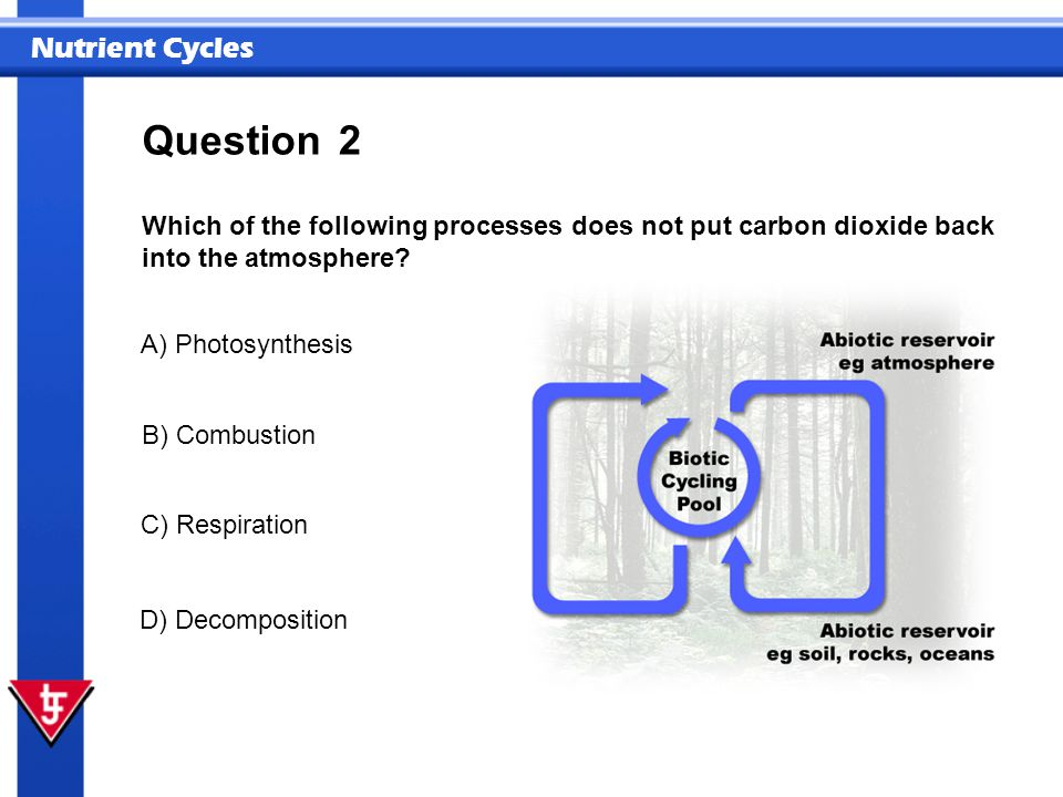 Question 2. Which of the following processes does not put carbon dioxide back into the atmosphere