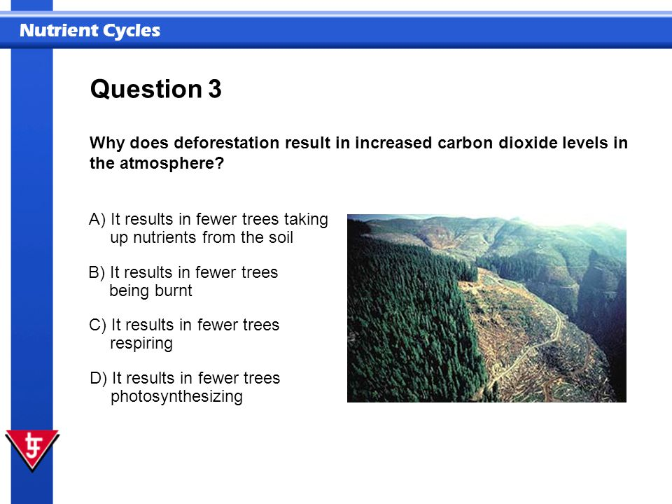 Question 3. Why does deforestation result in increased carbon dioxide levels in the atmosphere