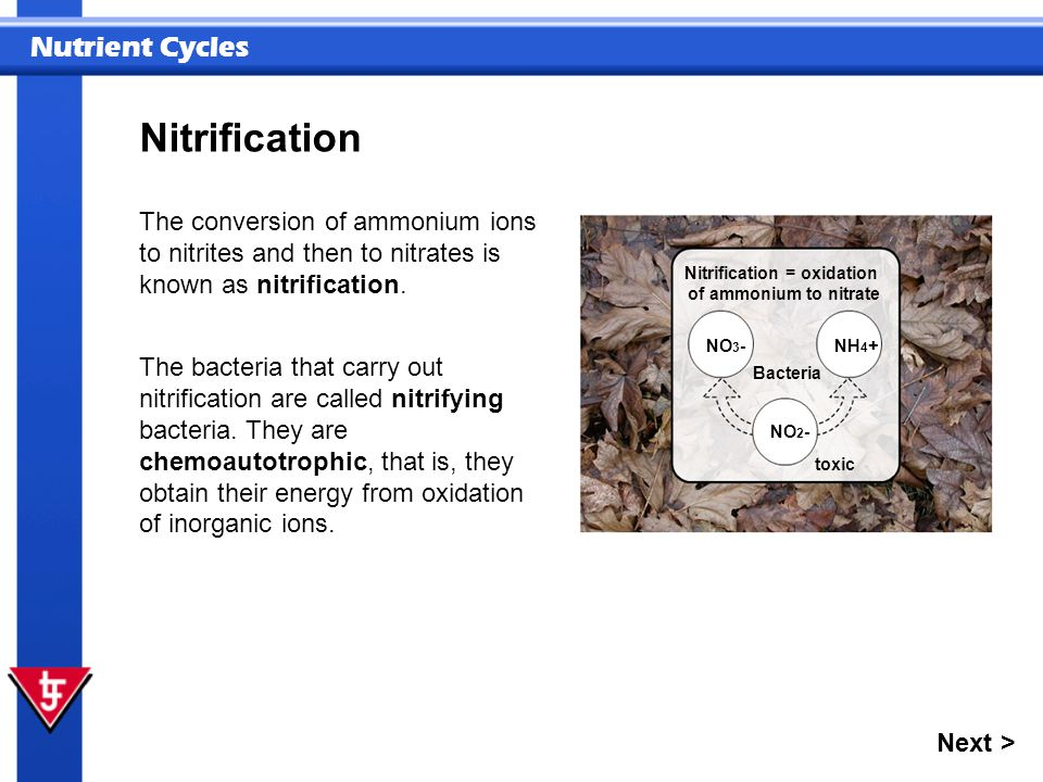 Nitrification = oxidation of ammonium to nitrate