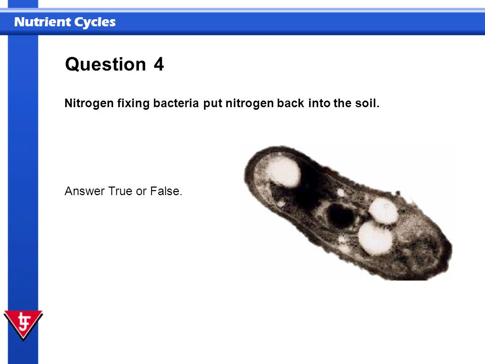 Question 4 Nitrogen fixing bacteria put nitrogen back into the soil.