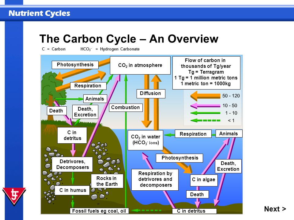 The Carbon Cycle – An Overview