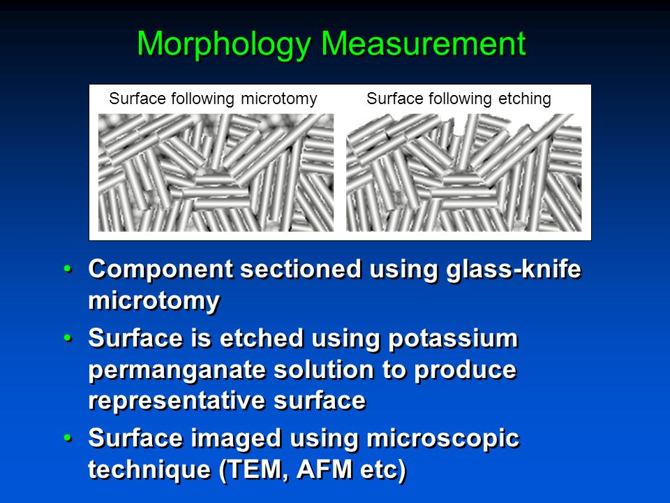 Morphology Measurement