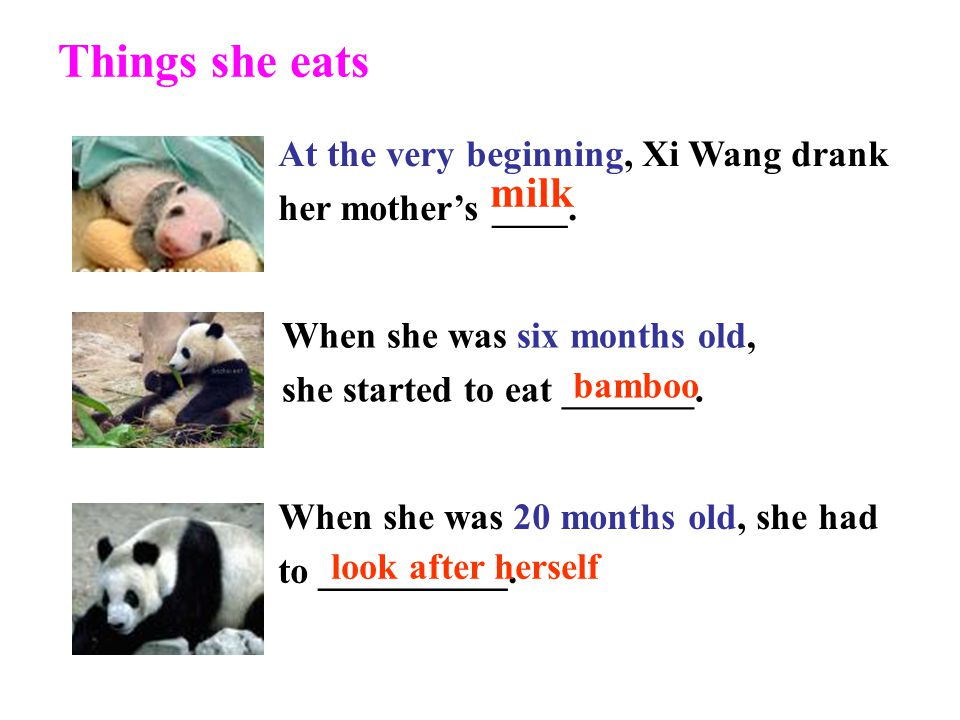 Things she eats At the very beginning, Xi Wang drank her mother's ____. milk. When she was six months old,