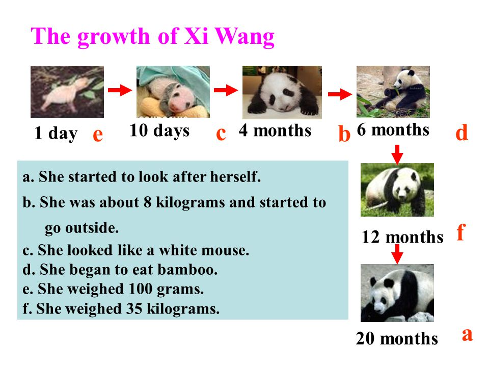 The growth of Xi Wang e c b d f a 20 months 1 day 10 days 4 months