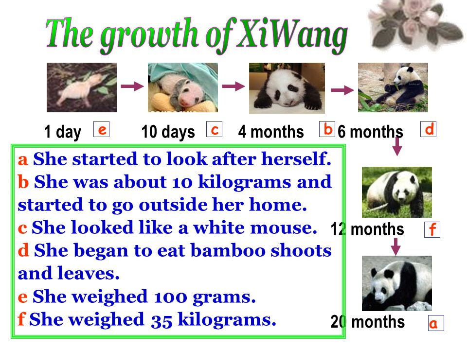 The growth of XiWang 1 day 10 days 4 months 6 months