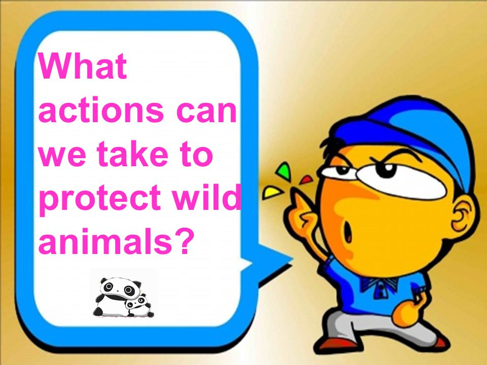 What actions can we take to protect wild animals
