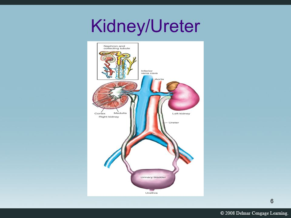 Kidney/Ureter
