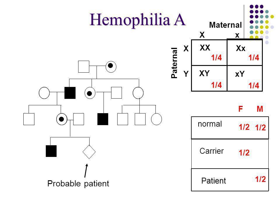 Hemophilia A Probable patient Maternal X x Carrier X XY Xx XX 1/4