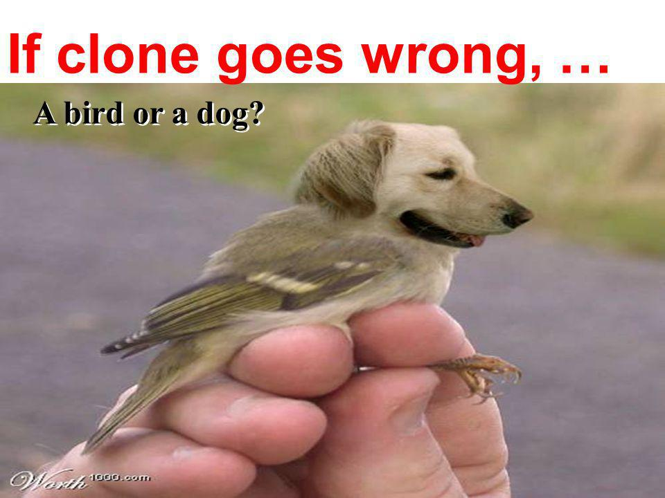 If clone goes wrong, … A bird or a dog