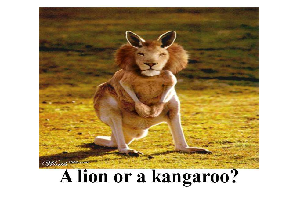 A lion or a kangaroo