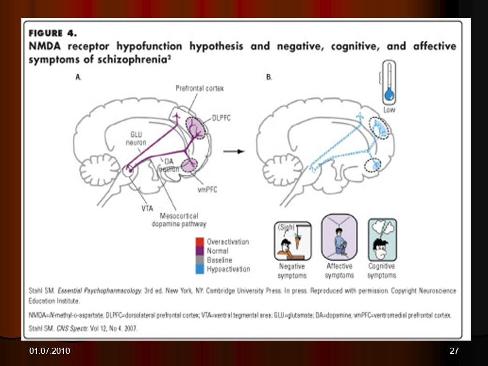 Role of Glutamate in the Mesocortical System